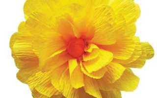 Цветы из бумаги тишью мастер класс