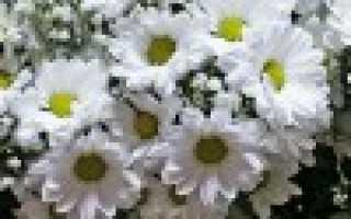 Какие цветы подарить на 18 летие девушке