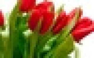 Стих цветок для мамы