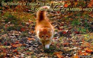 Тост про осень смешные