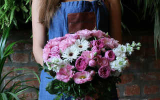 Цветы для свекрови картинки