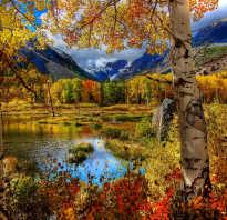 Картинки цветов и листьев осенью