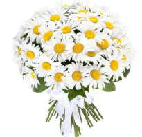 Фото цветов в подарок девушке