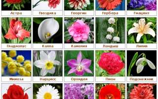 Какие цветы подарить молодой девушке