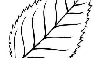 Фото осеннего листочка